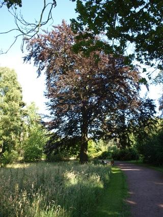 Bilder: Im Landschaftspark Degenershausen.