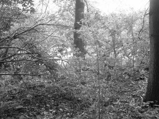 Bild: An der wüsten Ortschaft Lichthagen oder Lichthain bei Gorenzen im Unterharz.