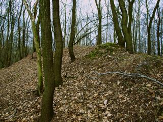 Bild: Die Reste der Großen Kuppenburg bei Bräunrode.