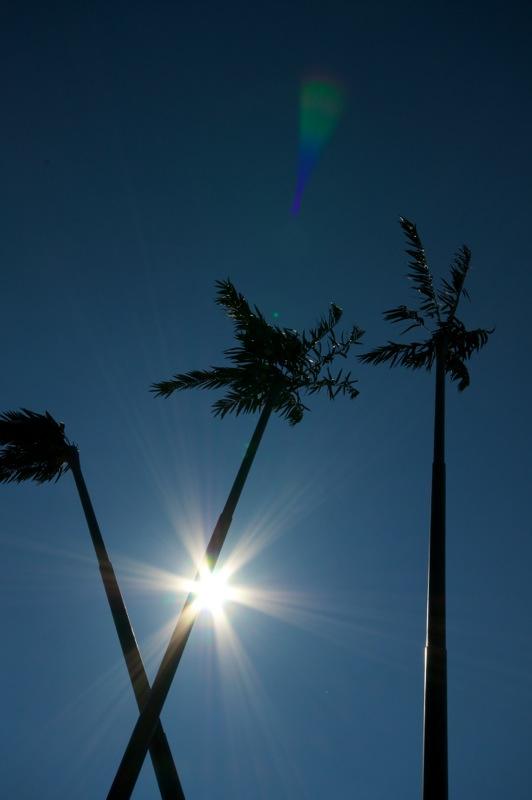 Aschersleben - die Palmen im gleißenden Sonnenlicht