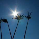 Aschersleben - die Palmen am Bahnhof im gleißenden Sonnenlicht