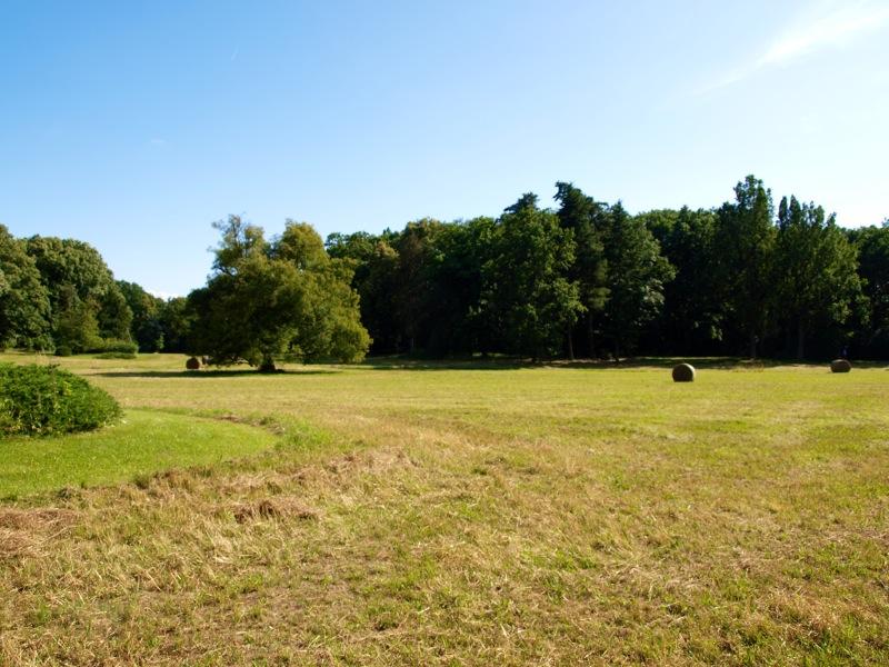 Bild: Degenershausen - Im Landschaftspark.