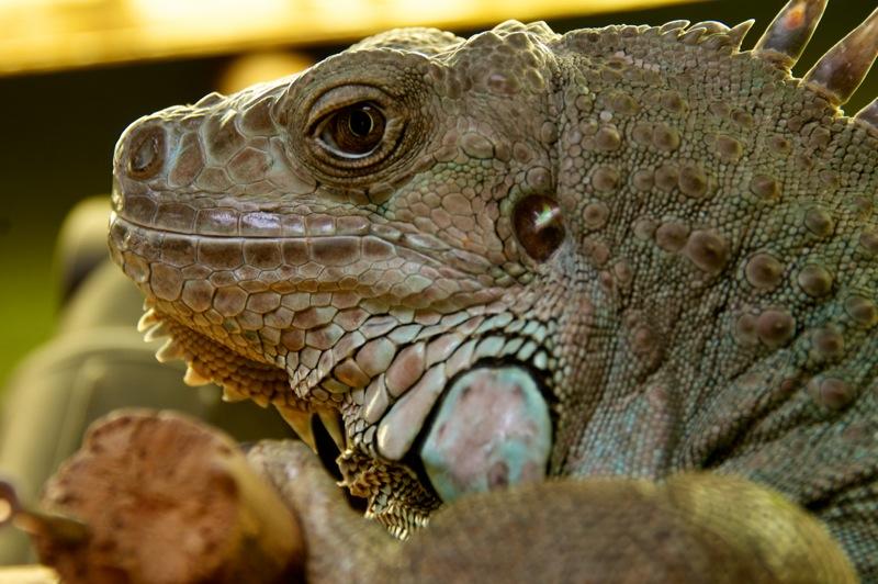 Bild: Reptliie im Zoo von Aschersleben.