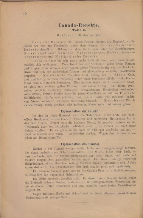 Bild: Beschreibung der Canada-Renette im Buch Unsere besten Deutschen Obstsorten Band I: Äpfel von 1923.