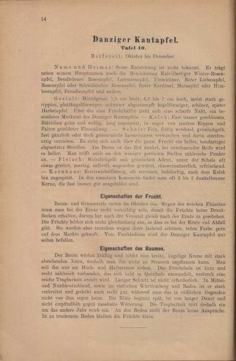 Bild: Beschreibung des Danziger Kantapfel im Buch Unsere besten Deutschen Obstsorten Band I: Äpfel von 1923.