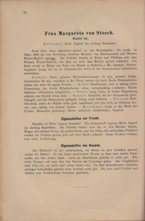 Bild: Beschreibung des Margarete von Stosch im Buch Unsere besten Deutschen Obstsorten Band I: Äpfel von 1923.