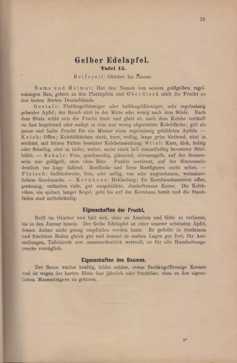 Bild: Beschreibung des Gelber Edelapfel im Buch Unsere besten Deutschen Obstsorten Band I: Äpfel von 1923.