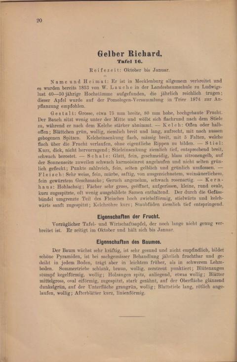 Bild: Beschreibung des Gelber Richard im Buch Unsere besten Deutschen Obstsorten Band I: Äpfel von 1923.