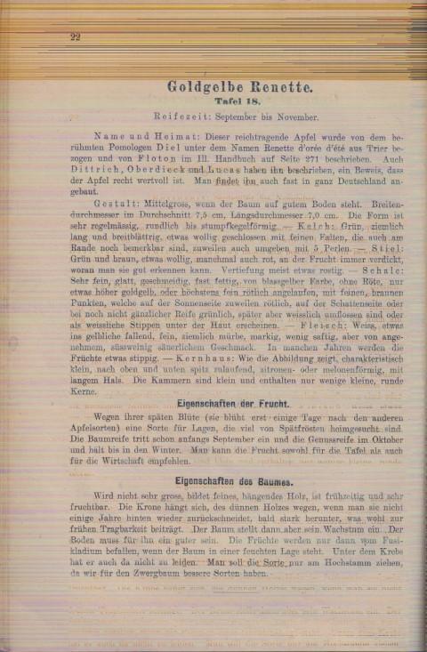 Bild: Beschreibung der Goldgelben Renette im Buch Unsere besten Deutschen Obstsorten Band I: Äpfel von 1923.