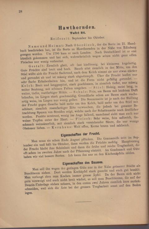 Bild: Beschreibung des Hawthornden im Buch Unsere besten Deutschen Obstsorten Band I: Äpfel von 1923.