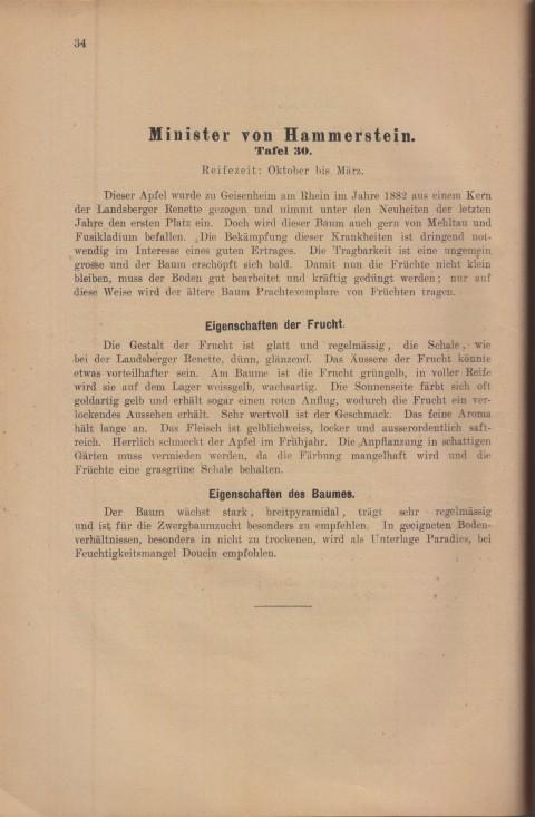 Bild: Beschreibung des Minister von Hammerstein im Buch Unsere besten Deutschen Obstsorten Band I: Äpfel von 1923.