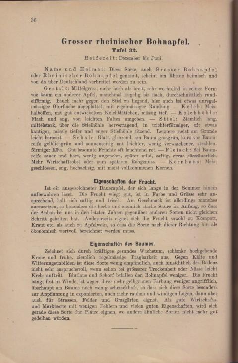 Bild: Beschreibung des Großer Rheinischer Bohnapfel im Buch Unsere besten Deutschen Obstsorten Band I: Äpfel von 1923.