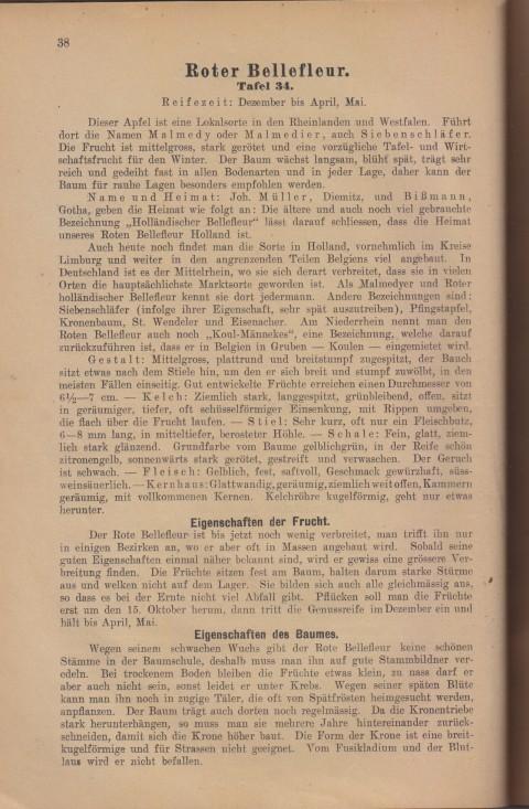 Bild: Beschreibung des Roter Bellefleur im Buch Unsere besten Deutschen Obstsorten Band I: Äpfel von 1923.