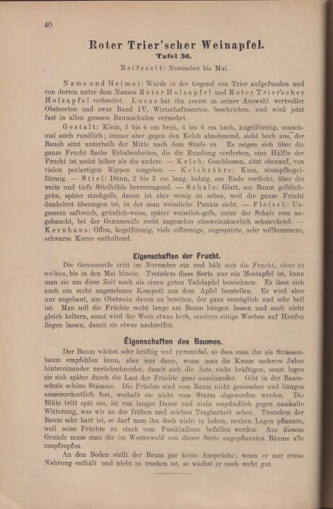Bild: Beschreibung des Roter Trier'scher Weinapfel im Buch Unsere besten Deutschen Obstsorten Band I: Äpfel von 1923.