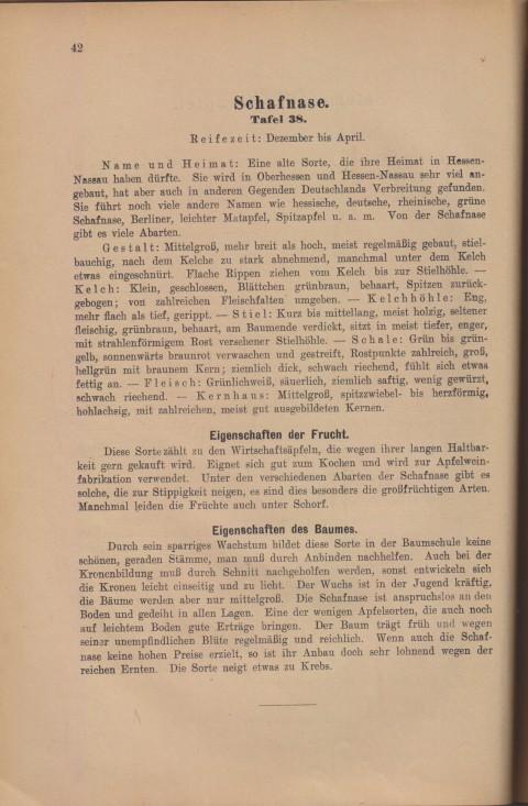 Bild: Beschreibung der Schafnase im Buch Unsere besten Deutschen Obstsorten Band I: Äpfel von 1923.