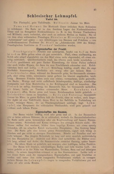Bild: Beschreibung des Schlesischer Lehmapfel im Buch Unsere besten Deutschen Obstsorten Band I: Äpfel von 1923.