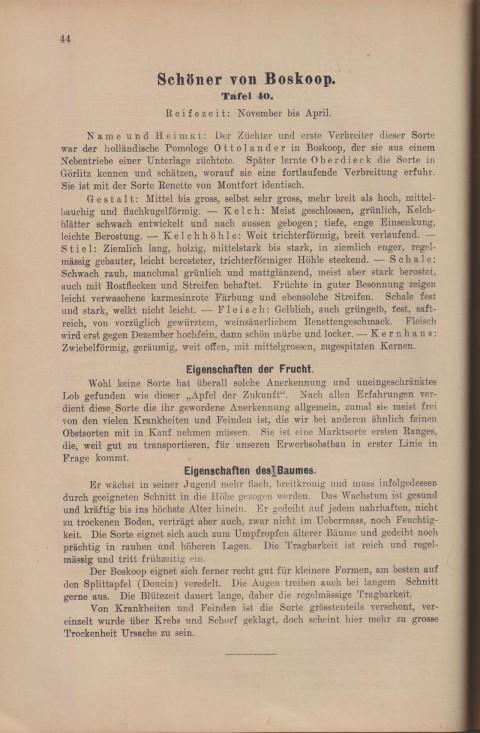 Bild: Beschreibung des Schöner von Boskop im Buch Unsere besten Deutschen Obstsorten Band I: Äpfel von 1923.