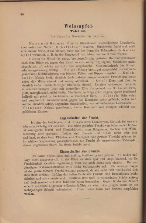 Bild: Beschreibung des Weissapfel im Buch Unsere besten Deutschen Obstsorten Band I: Äpfel von 1923.