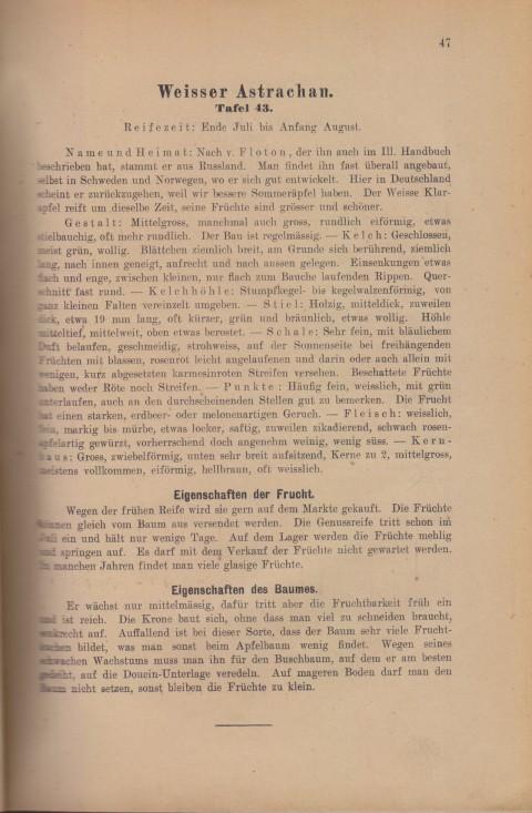 Bild: Beschreibung des Weisser Astrachan im Buch Unsere besten Deutschen Obstsorten Band I: Äpfel von 1923.