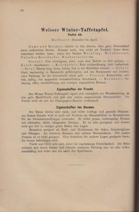 Bild: Beschreibung des Weisser Winter-Taffetapfel im Buch Unsere besten Deutschen Obstsorten Band I: Äpfel von 1923.