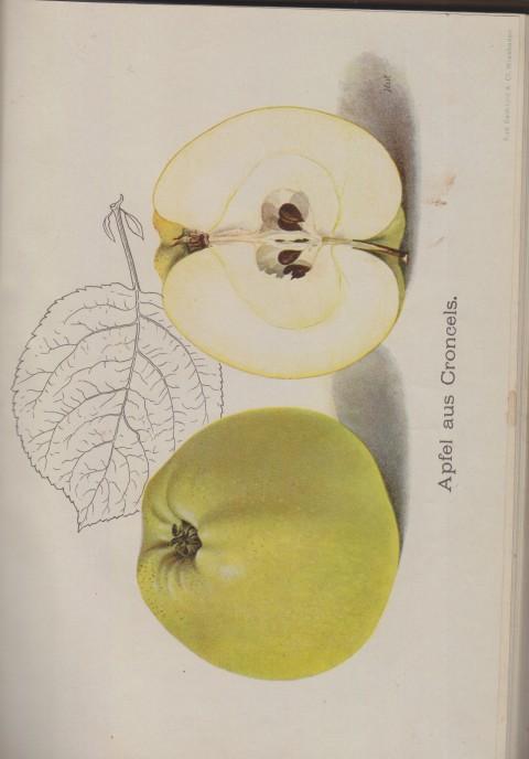 Bild: Bildtafel zum Apfel aus Croncels im Buch Unsere besten Deutschen Obstsorten Band I: Äpfel von 1923.