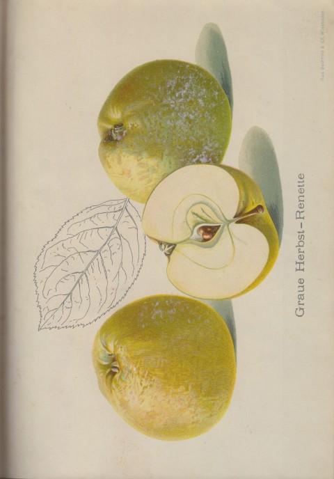 Bild: Bildtafel zum Graue Herbst-Renette im Buch Unsere besten Deutschen Obstsorten Band I: Äpfel von 1923.