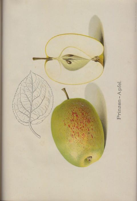 Bild: Bildtafel zum Prinzen-Apfel im Buch Unsere besten Deutschen Obstsorten Band I: Äpfel von 1923.